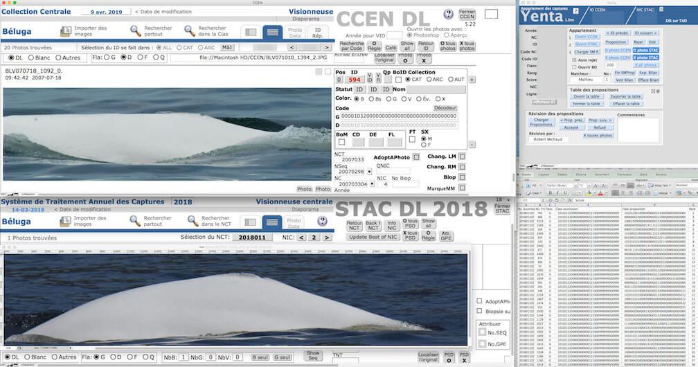 Copie d'écran du logiciel de codage des bélugas