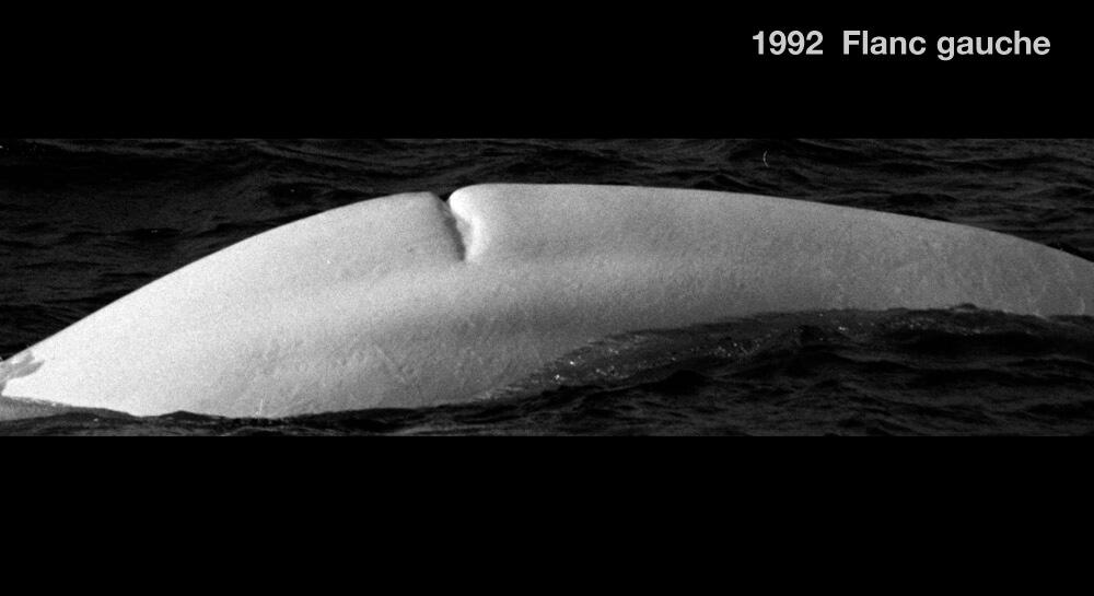 left side, 1992