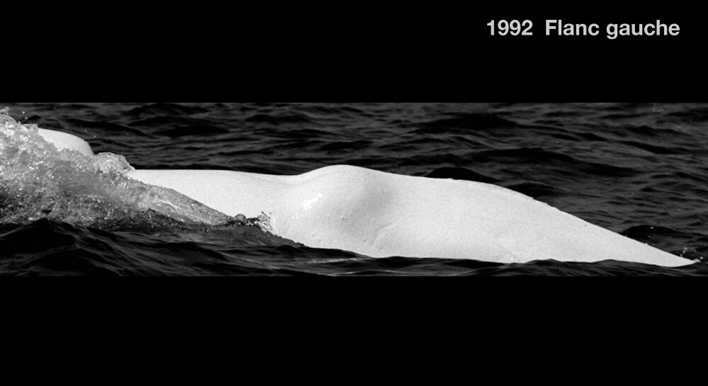 Flanc gauche, 1992