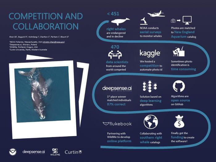Résultat de la compétition de la National Oceanic and Atmospheric Administration pour trouver une solution au processus souvent fastidieux de l'analyse des photos de baleines noires à des fins d'identification.