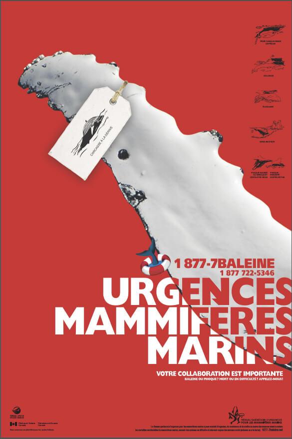 Poster Urgences Mammifères Marins