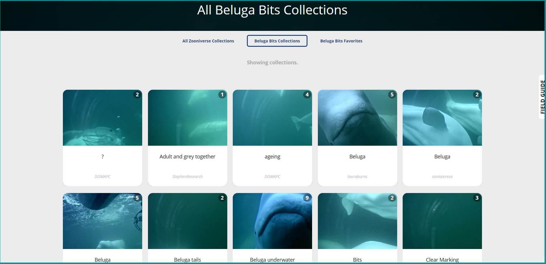 Images de béluga prisent par les spectateurs