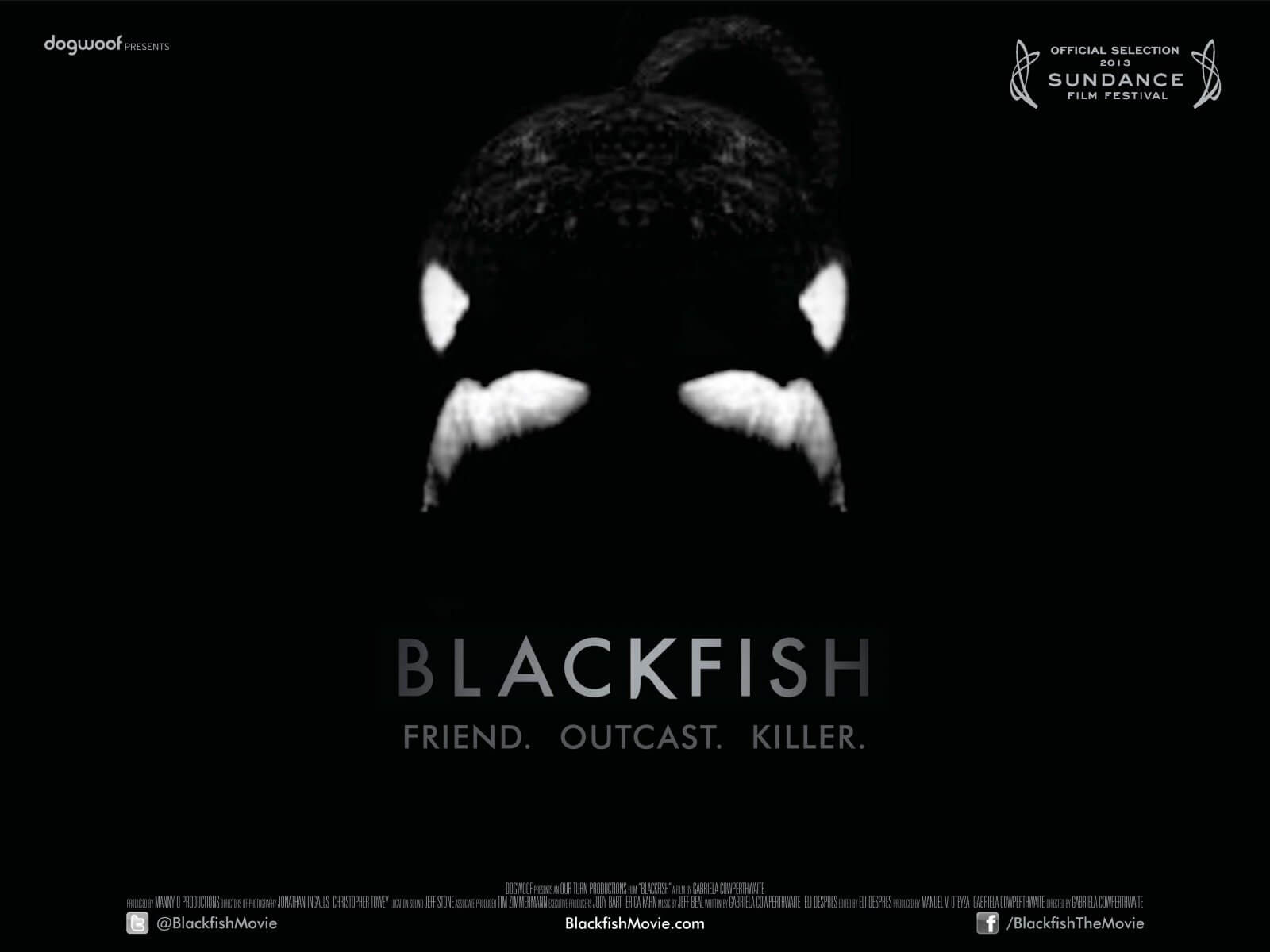 Affiche du documentaire Blackfish