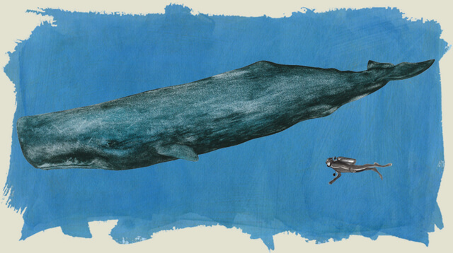 sperm whale's drawing