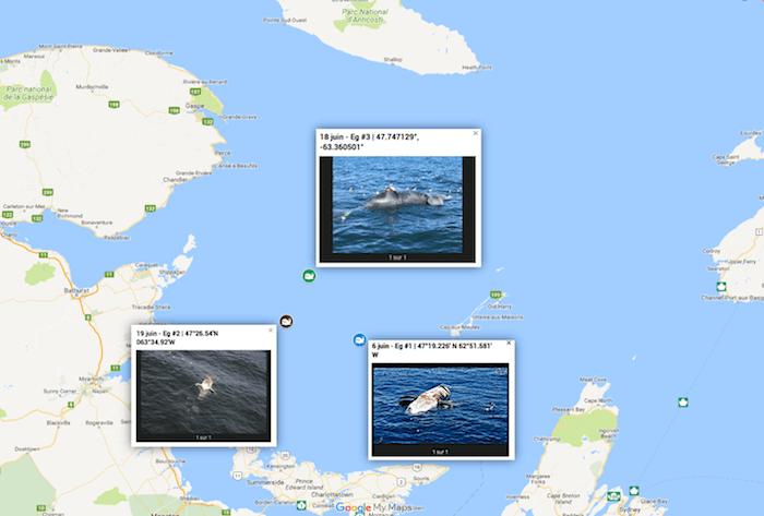 Cartes montrant l'emplacement des trois carcasses de baleines noires qui ont été rapportées dans le golfe du Saint-Laurent le 6, le 18 et le 19 juin 2017