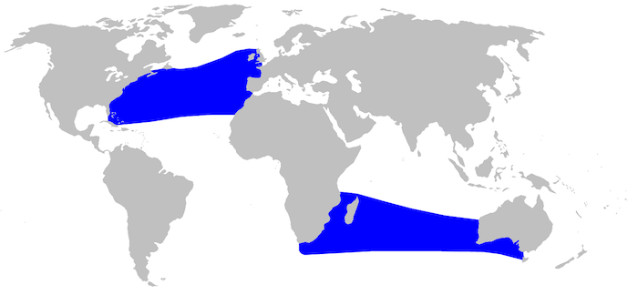 Carte de l'aire de distribution de la baleine à bec de True