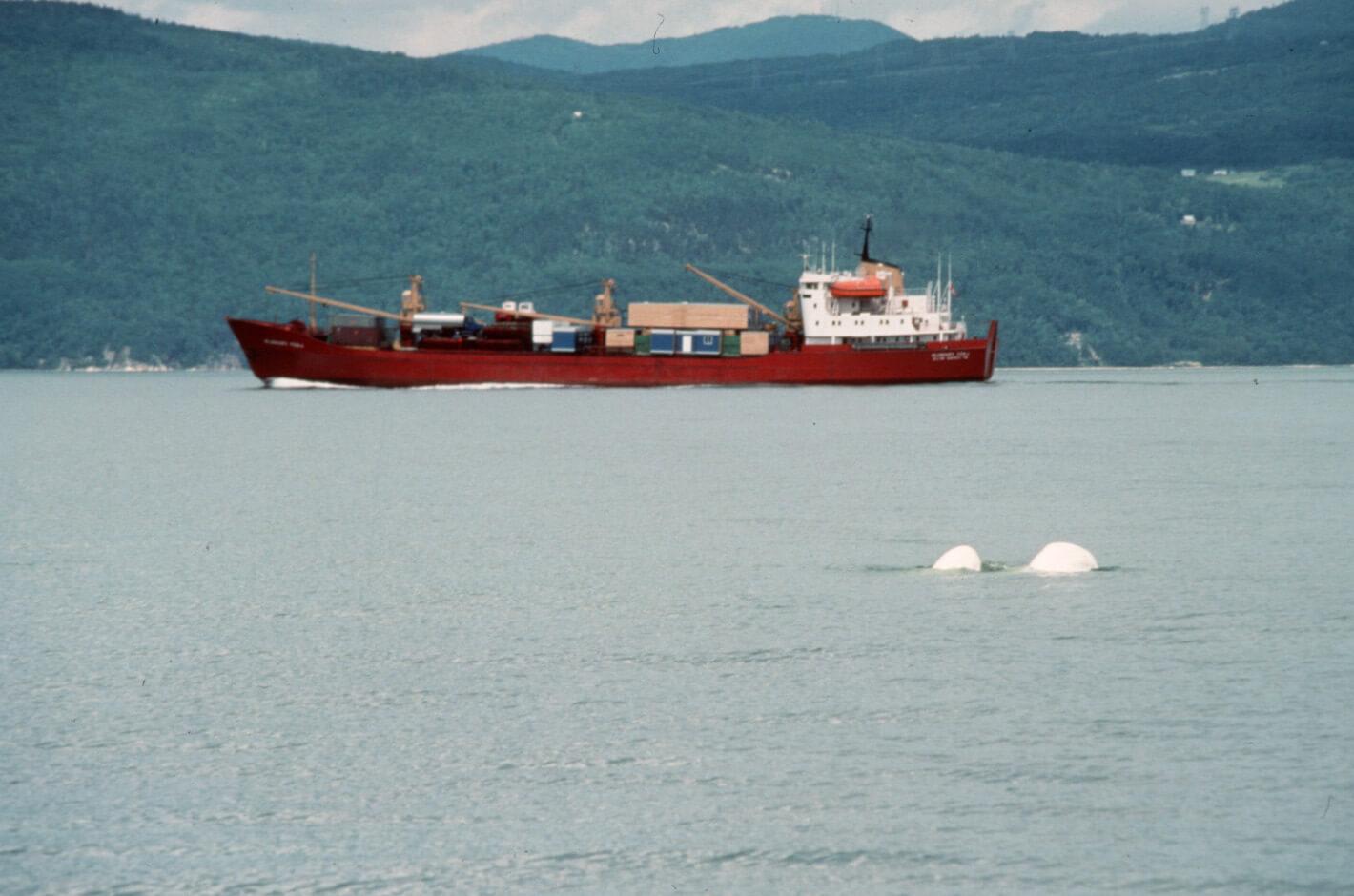trafic maritime Béluga du Saint-Laurent