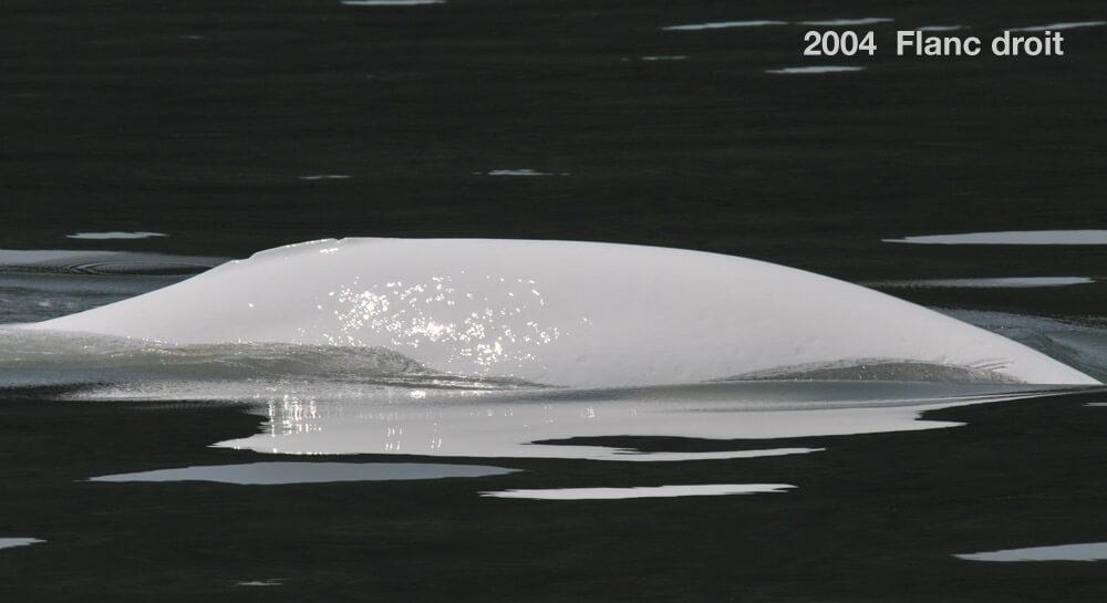 Flanc droit, 2004
