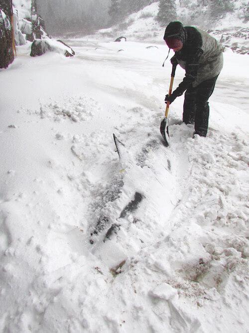 Un bénévole dégage une carcasse de dauphin de la neige, sur la Côte-Nord