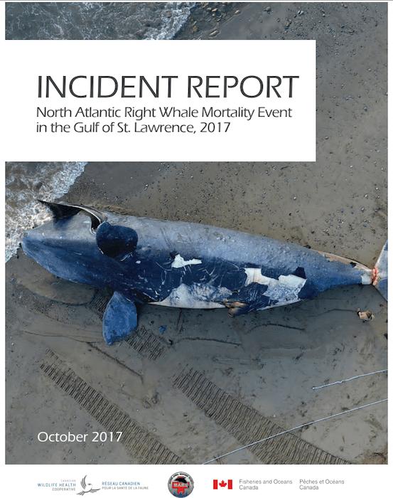 Rapport sur les mortalités des baleines noires dans le golfe du Saint-Laurent en 2017