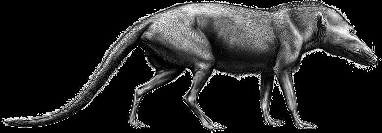 Pakicetus, le plus ancien cétacé connu.