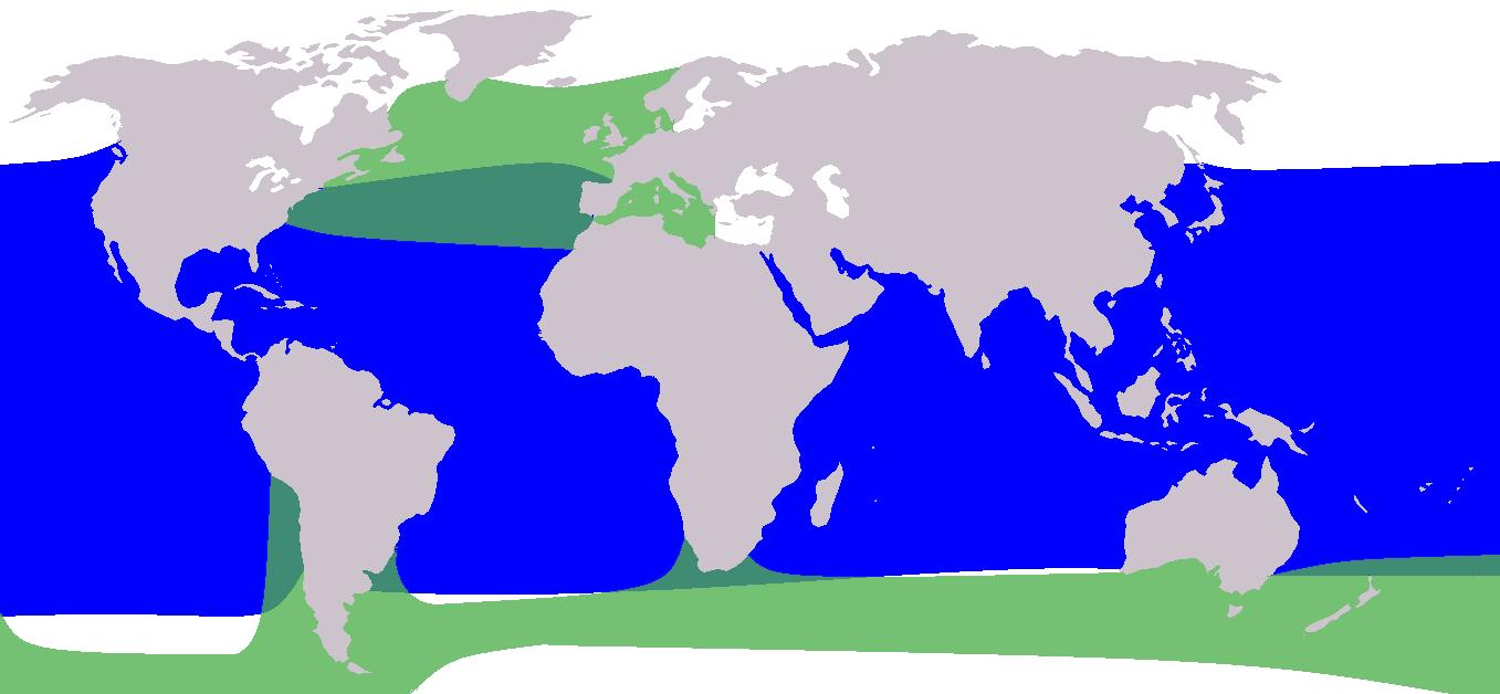 Carte de la répartion des deux espèces de globicéphales dans le monde.