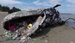 Une baleine échouée avec des objets de plastique sortant de sa gueule.