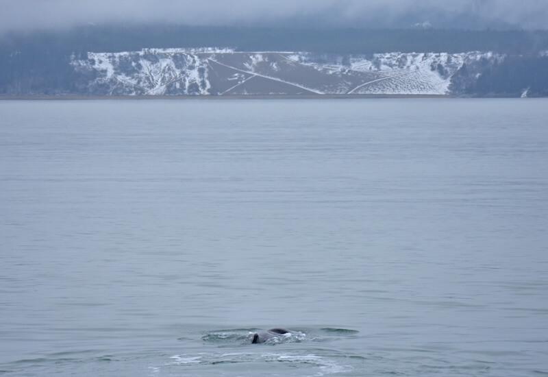 A sperm whale