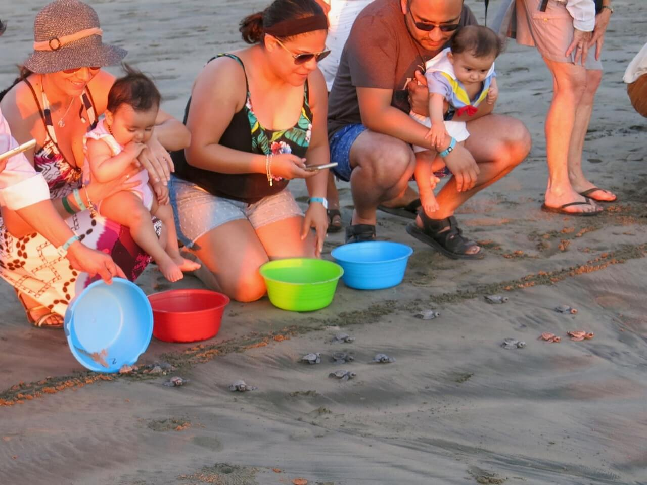 Le public participe à libérer les tortues près de l'océan après leur éclosion pour favoriser leur survie.
