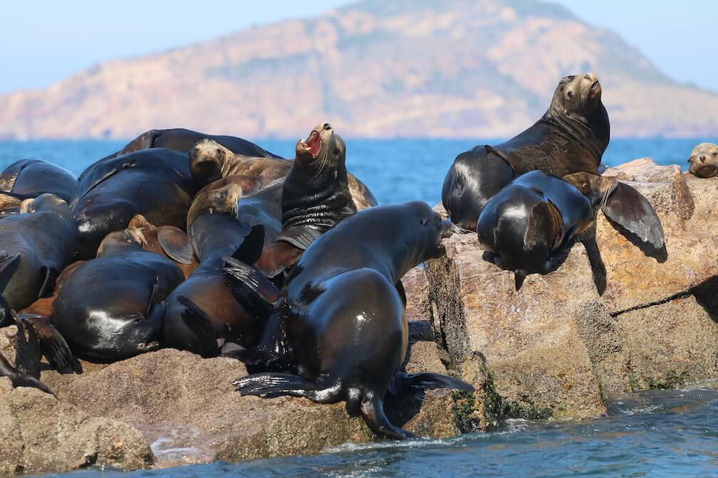 Des otaries de Californie se repose sur un rocher.