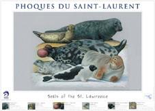 Affiche des phoque du saint-laurent