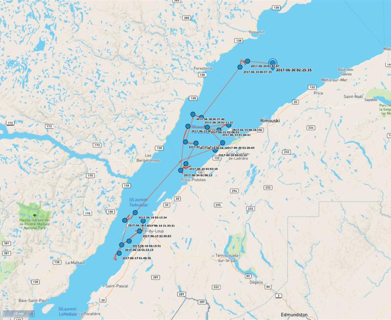 La carte du parcours du béluga, entre le 15 juin et le 30 juin.