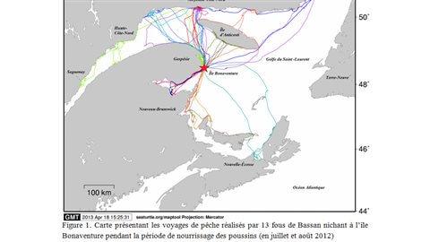 Comportements de recherche de nourriture de 13 Fous de Bassan en juillet et août 2012.