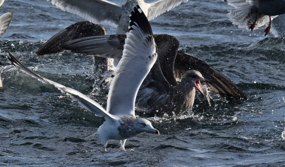 Une volée d'oiseaux