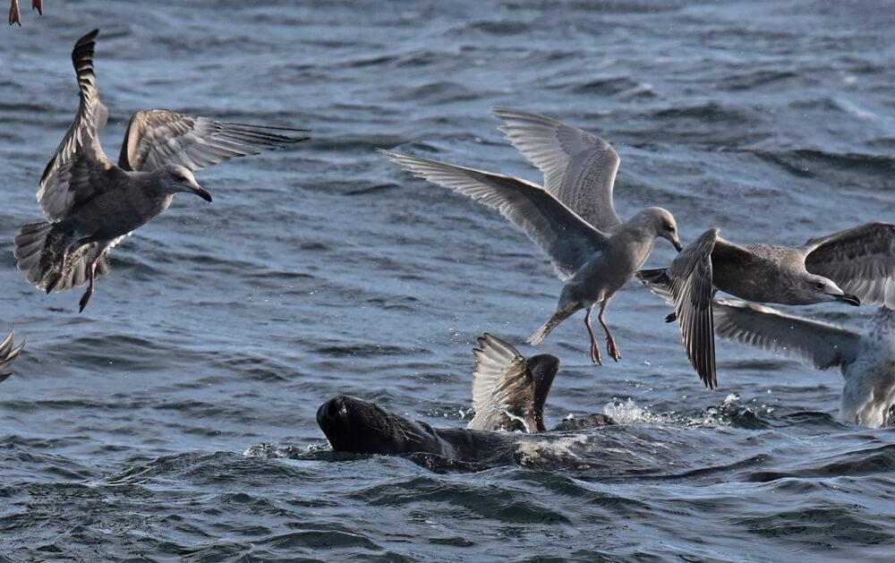 Un phoque et des oiseaux