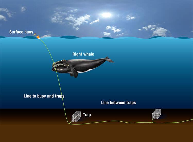 Schéma du fonctionnement des équipements de pêche avec cordage
