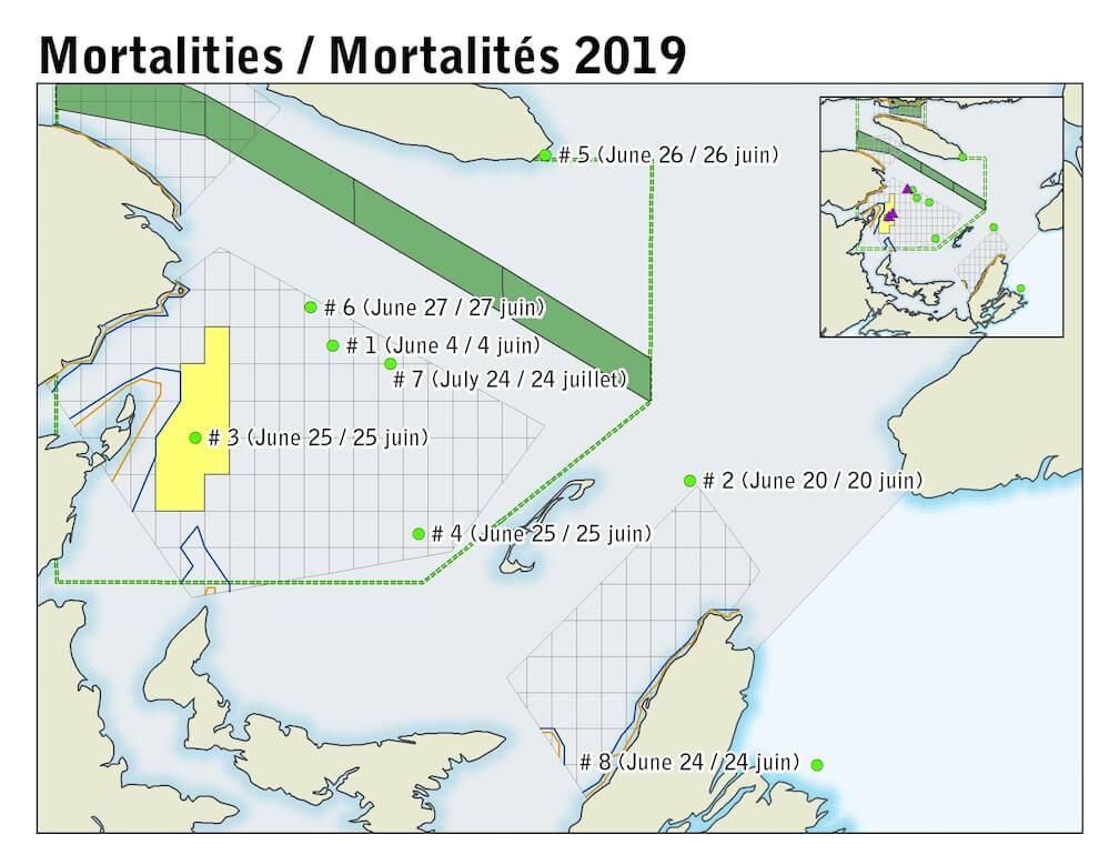 Carte des mortalités de baleines noires en date du 19 juillet 2019. © Pêches et Océans Canada