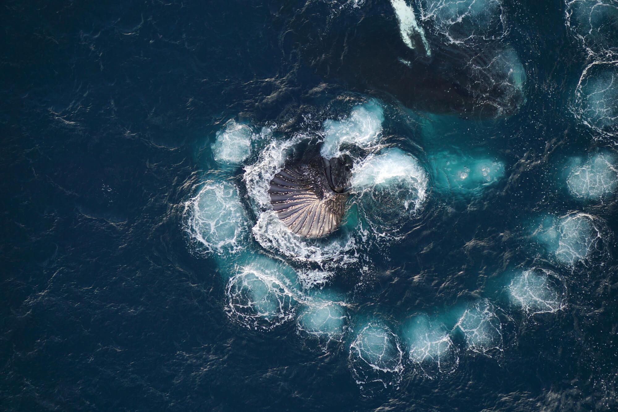 spirale de bulles
