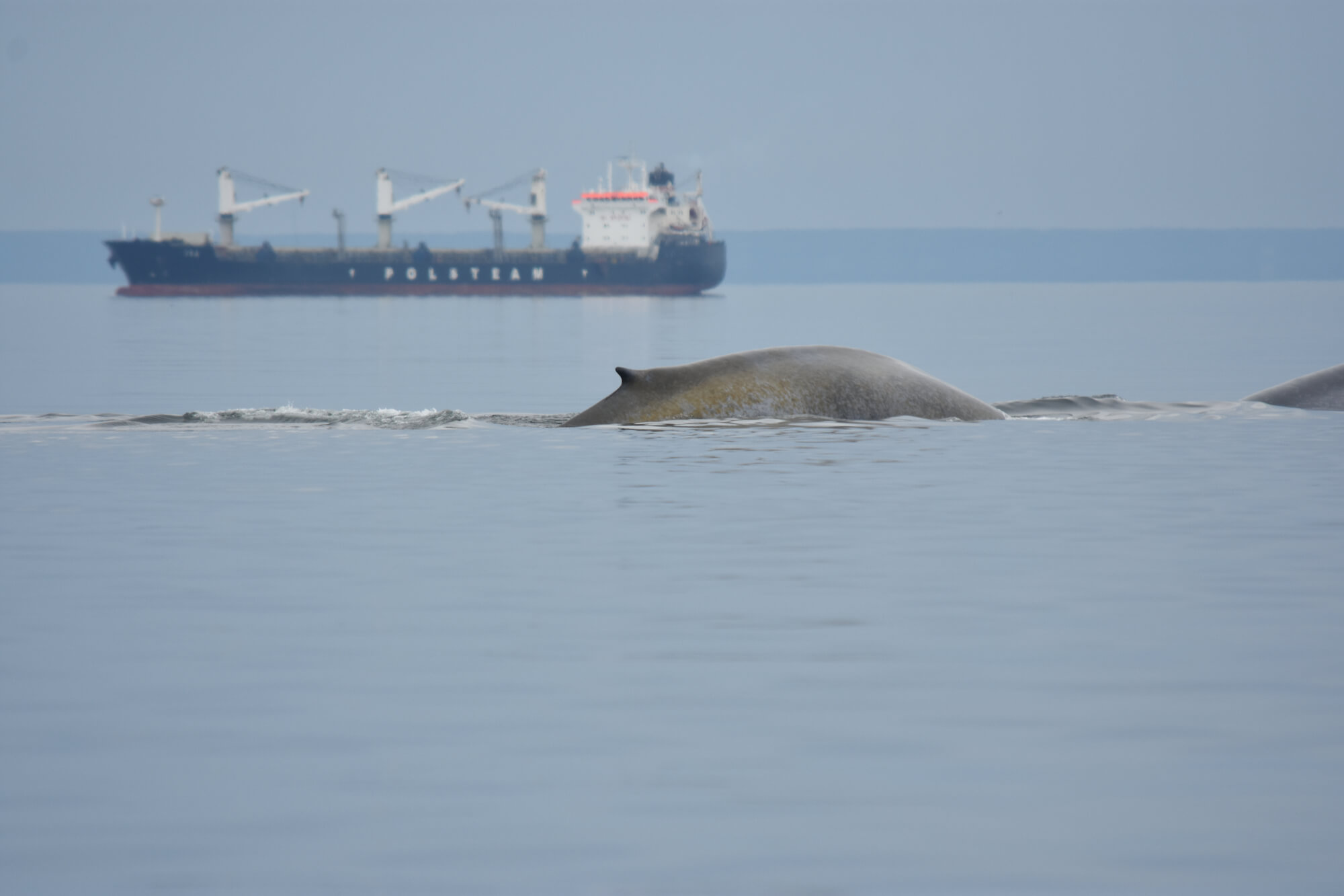 Blue whale and a ship.