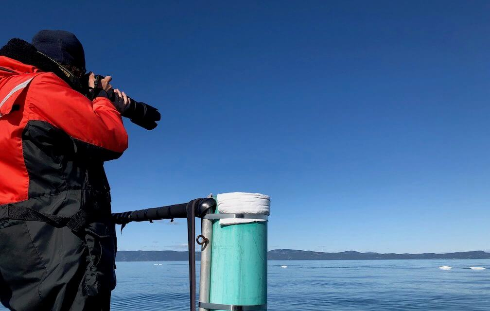 A research assistant taking pictures of belugas from the research boat