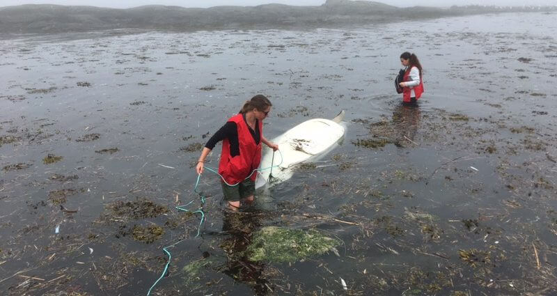 Volunteers Émilie Simard and Jade Brossard attach a line to a beluga carcass in the Parc National du Bic, Rimouski to bring it to shore.