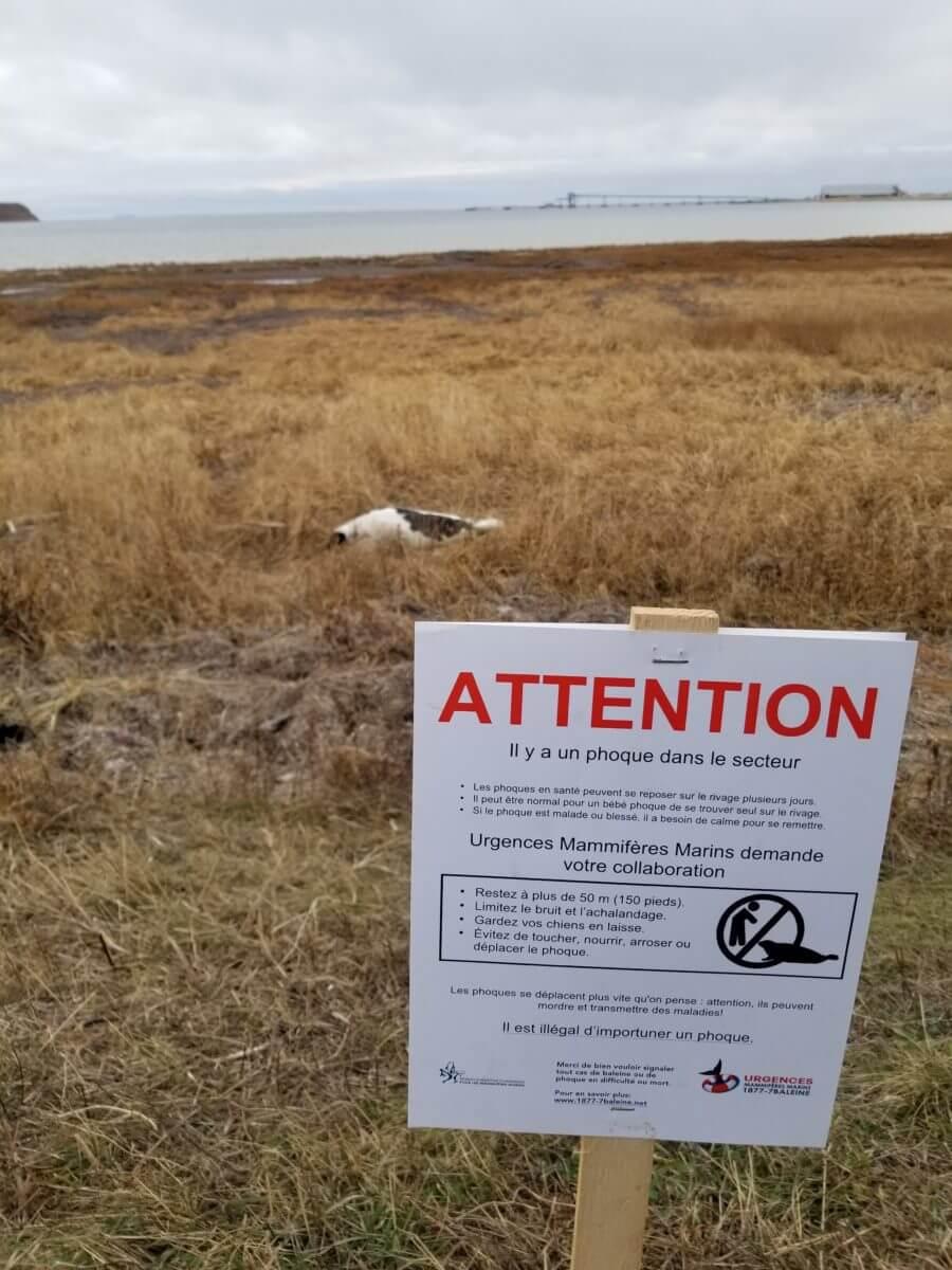 Une affiche du Réseau permet de sensibiliser le public afin de garder une distance minimale de 50 mètres des phoques.