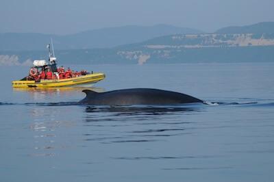 Baleine zodiac