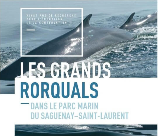 Catalogue grands rorquals