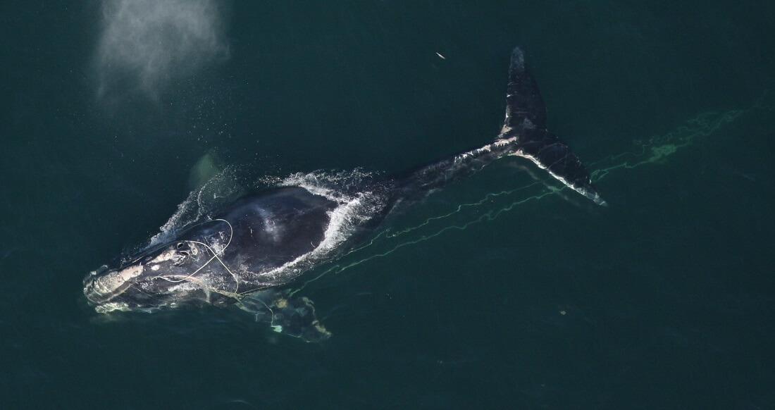 EG Baleine noire empetree