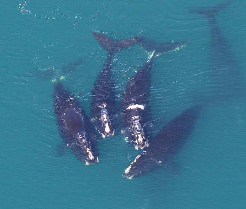 Whales seen from above.