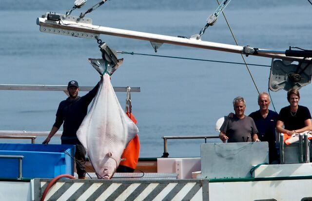 Le flétan pêché est aussi gros que l'humain qui le tient.