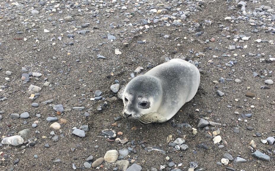 jeune chiot harcelé sur la plage