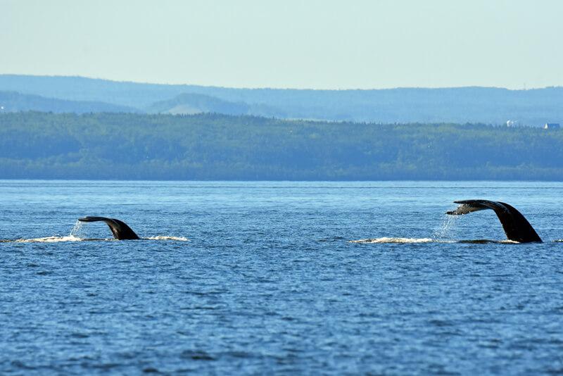 Tic Tac Toe et un baleineau