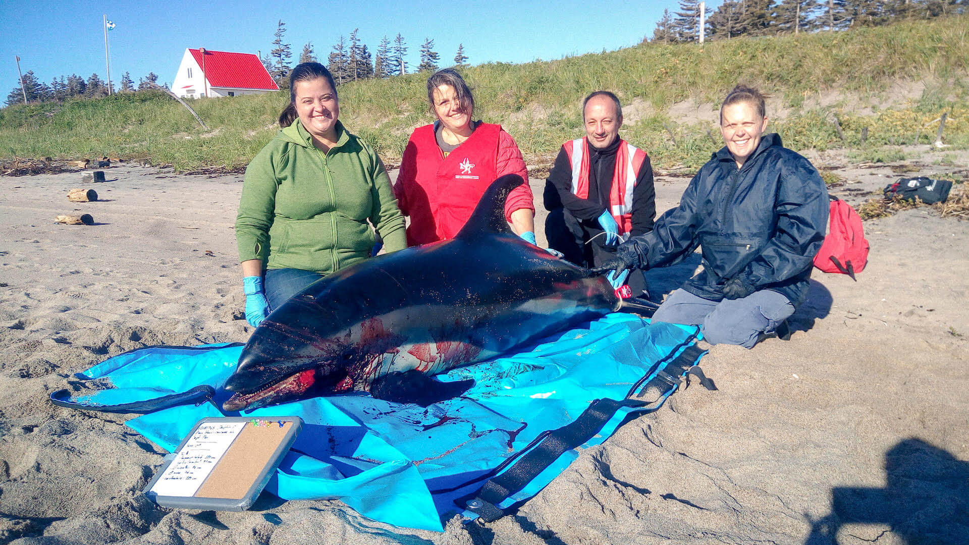 QMMERN volunteers at the side of a white-sided dolphin carcass.