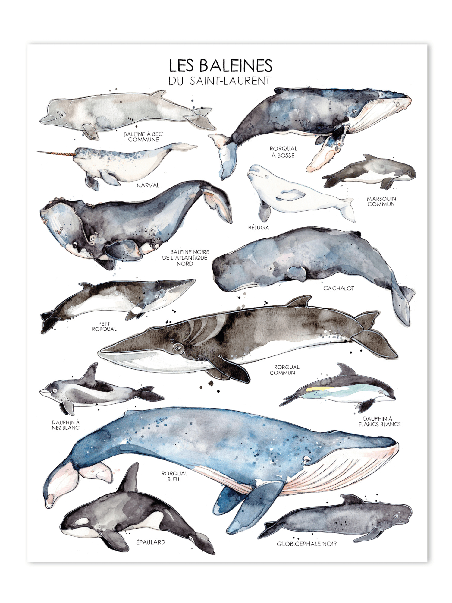 Posters with illustrations of St. Lawrence's whales.