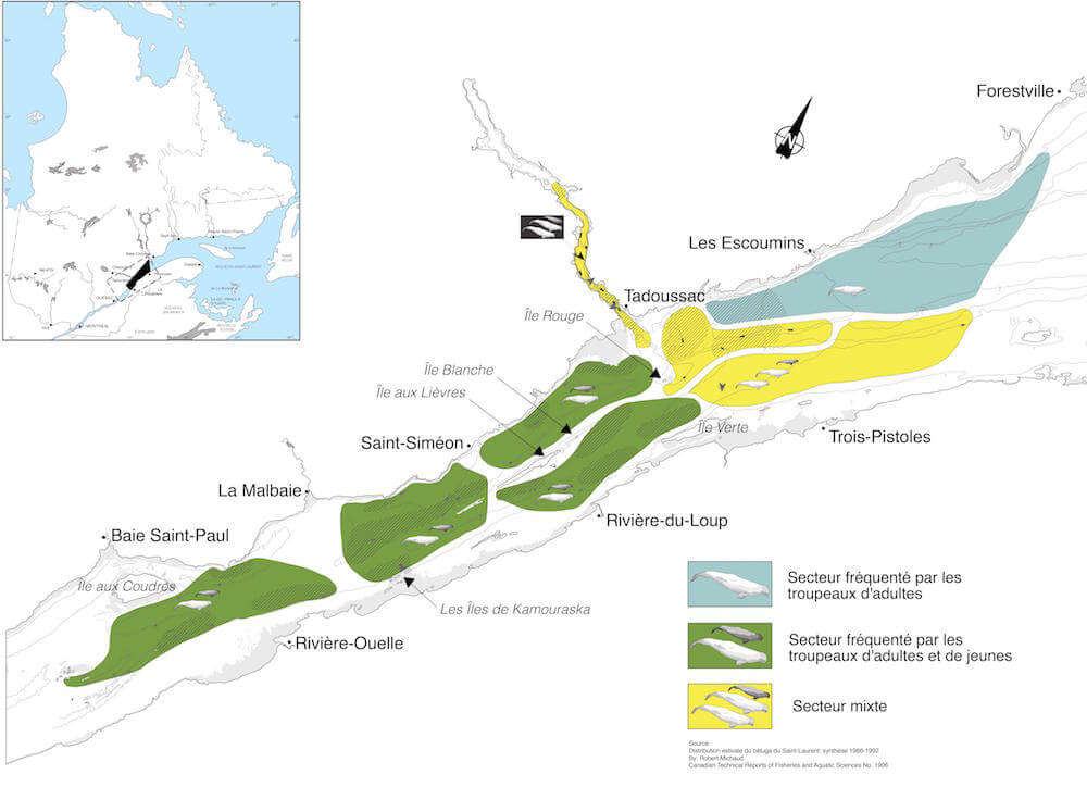 Maps of beluga whales repartition in three communities.