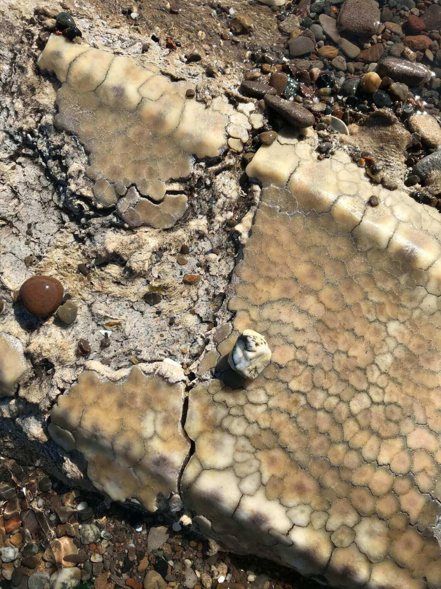 Détails de la carapace de la tortue